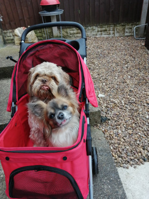Coco and sox ready to go a walk
