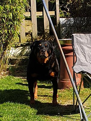 Beautiful Bella in the lockdown sunshine.😊