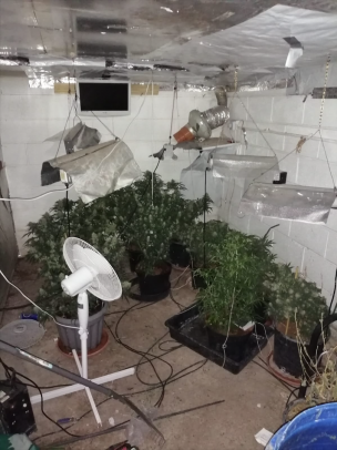 Main image for Arrests made for cannabis plants at Wilthorpe