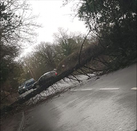 Main image for Tree blocking road