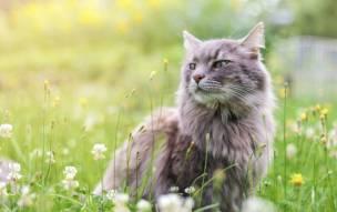 Main image for Animal charity seeks donations