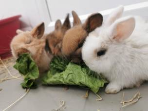 Main image for RSPCA 'fears' increase in abandoned rabbits