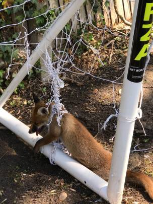 Main image for RSPCA issue netting warning