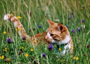 Main image for Barnsley cat charity to help with neutering costs
