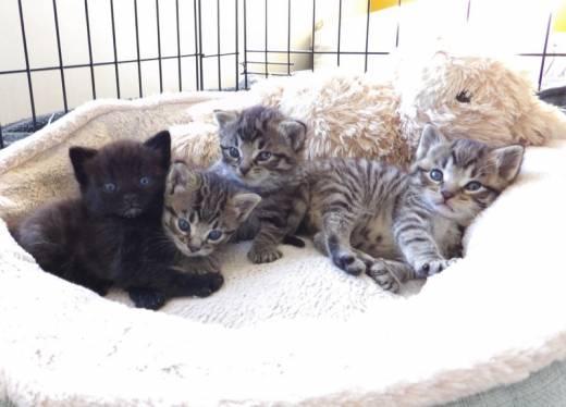 Main image for Horror as 'terrified' kittens left for dead