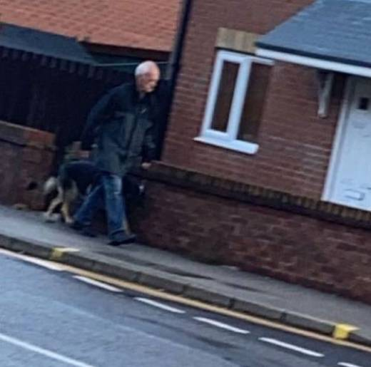 Main image for Police appeal to find dog owner