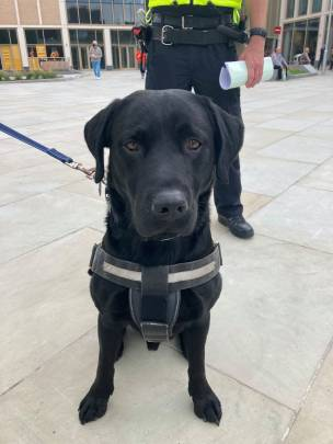 Main image for Police dog helps with arrest of two in town centre