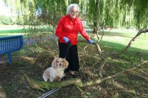 Main image for OAP has a lucky escape from falling branch